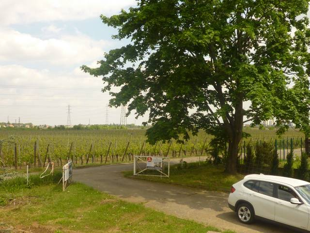 Photo Le vignoble de colmar 1