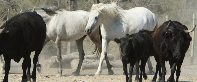 Photo Un nid en camargue 4