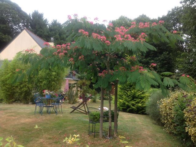Jardin du levant, chambre d'hôte à Combourg, Ille et Vilaine 35
